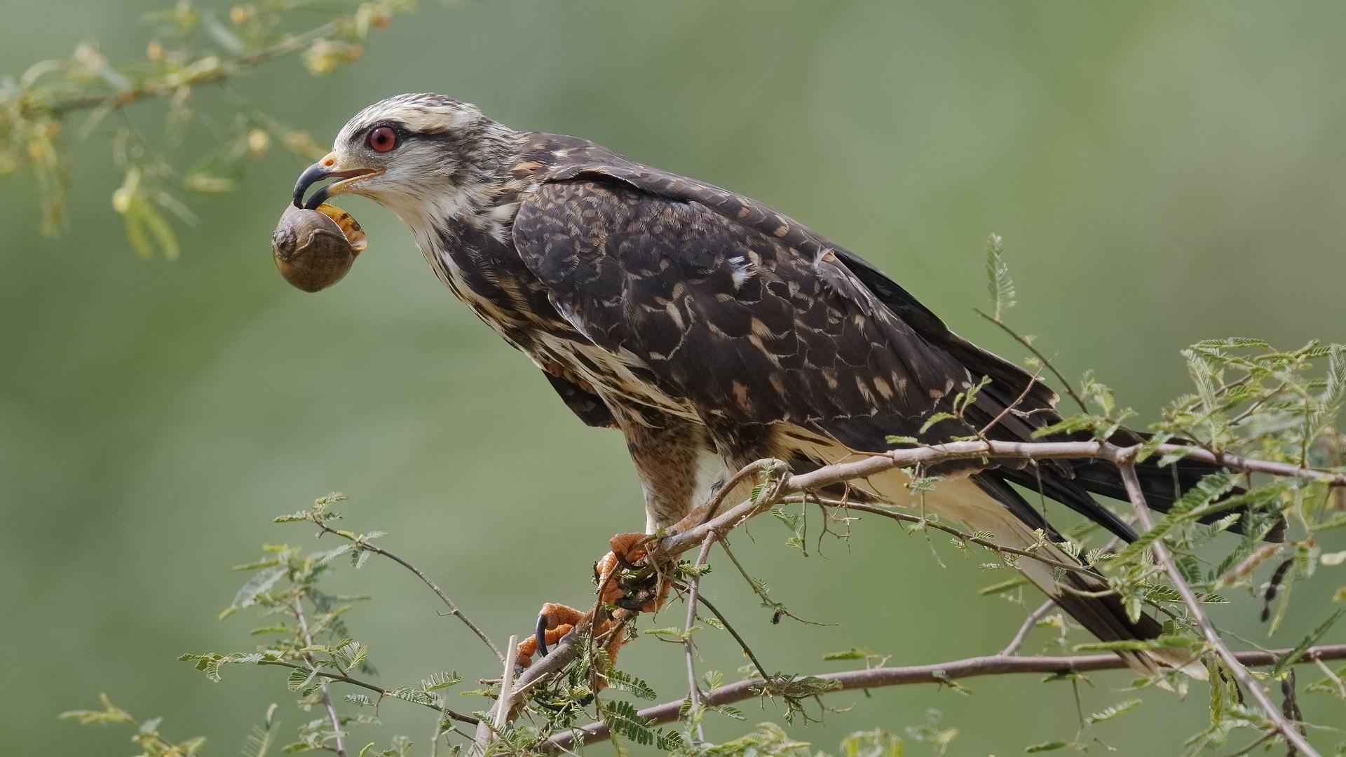 Mláďata s velkými ptáky