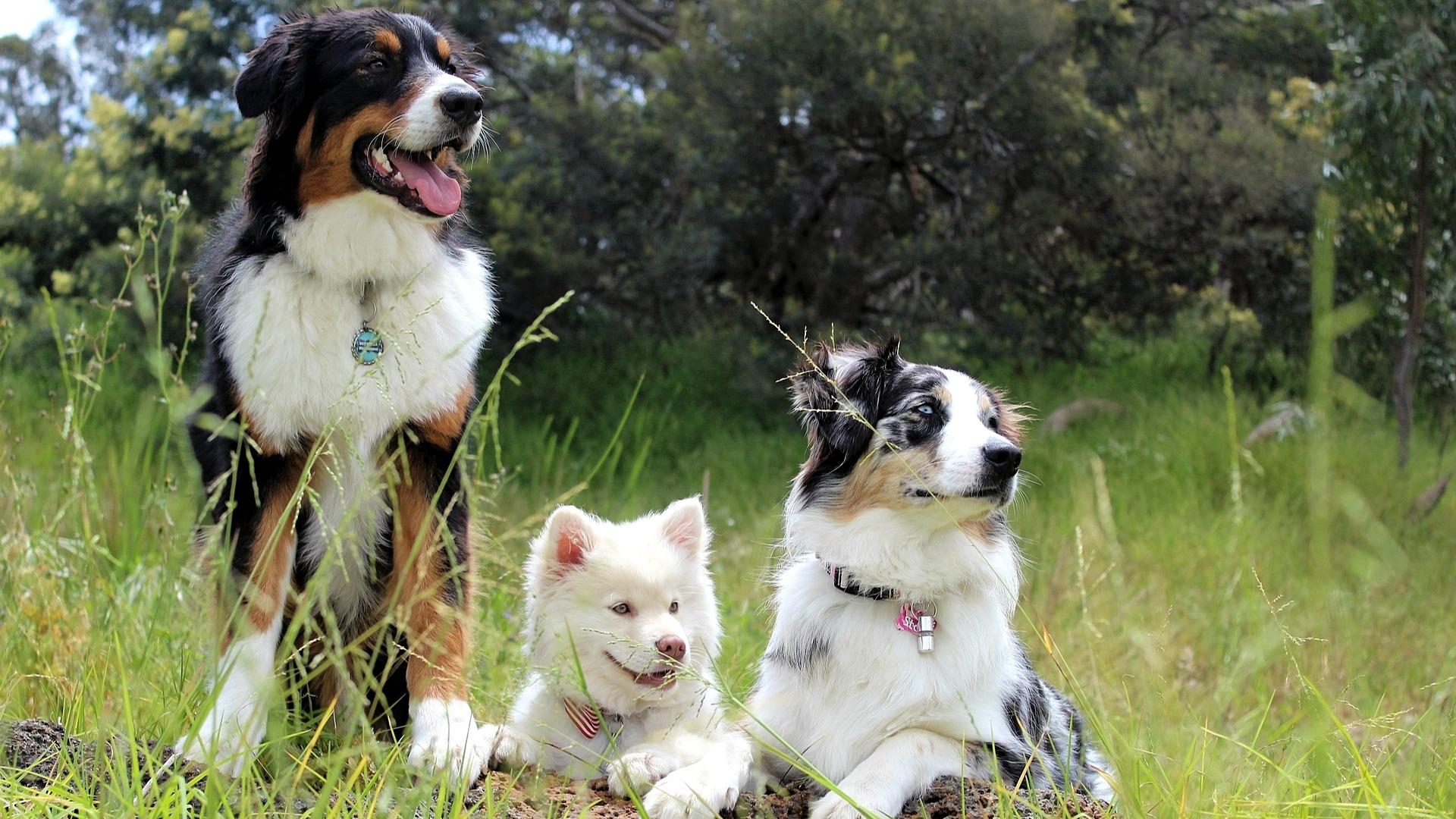 7dff32611a6 8 oblíbených psích plemen aneb 4 důvody