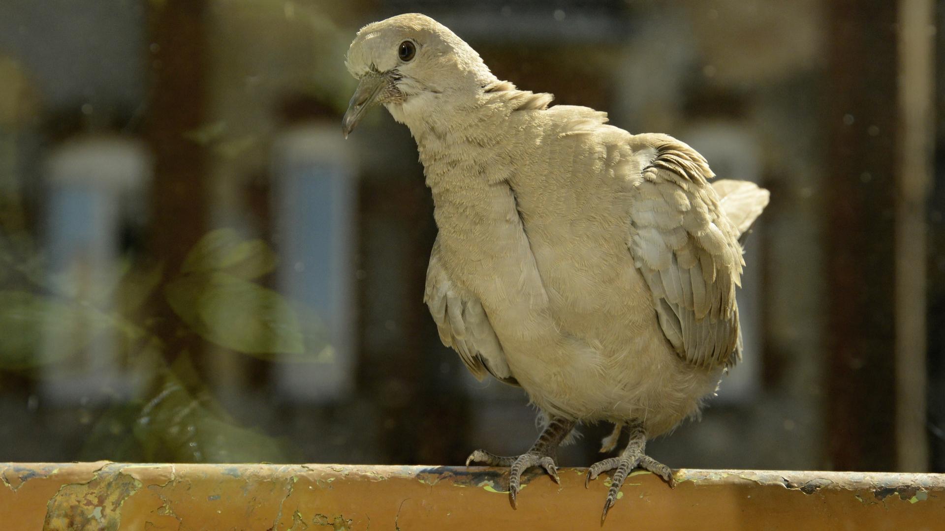 Mají vysoké lidi velké ptáky