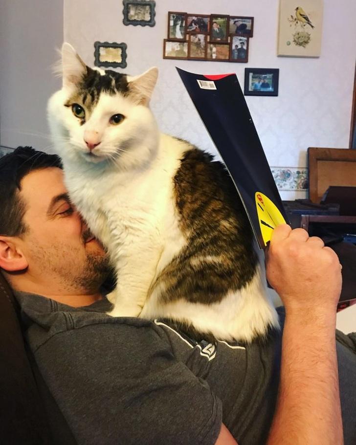 Imgur velká kočička