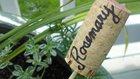 Korek oceníte i při pěstování bylinek. Podobné zápichy dokáže vyrobit každý, použít se dají v květináči i na záhonku Foto: