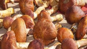 K sušení se hodí tvrdší houby Foto: