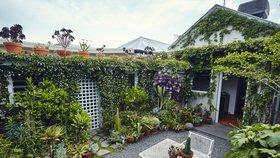 Popínavé rostliny pokryly zdi včetně té fasádní, ale i část střechy Foto: