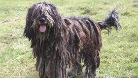 Otestujte se:  Kvíz pro milovníky psů Foto: