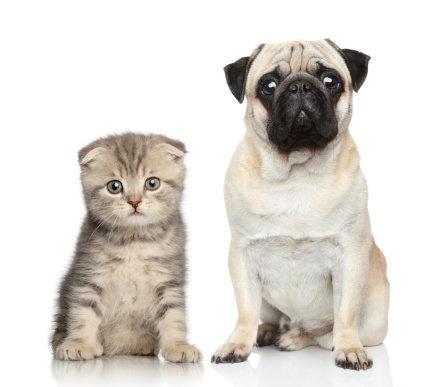 Domácí mazlíčci - Škrkavky, měchovci a psí tasemnice Foto: