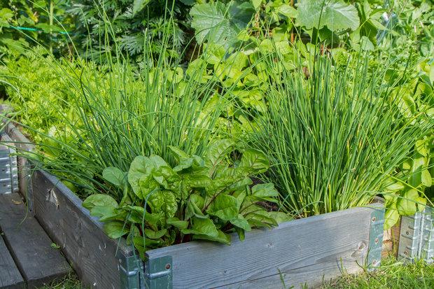 Vyzkoušejte vyvýšený záhon. Společně s bylinkami se v něm bude dařit i zelenině Foto: