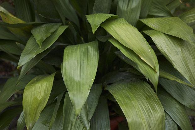 Litinová rostlina Foto: