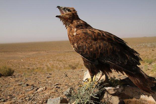 Krásy divokého Íránu (1/2) Foto: