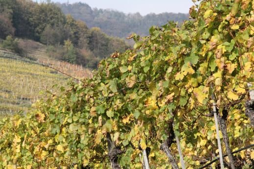 Zázraky vína 6 Foto:
