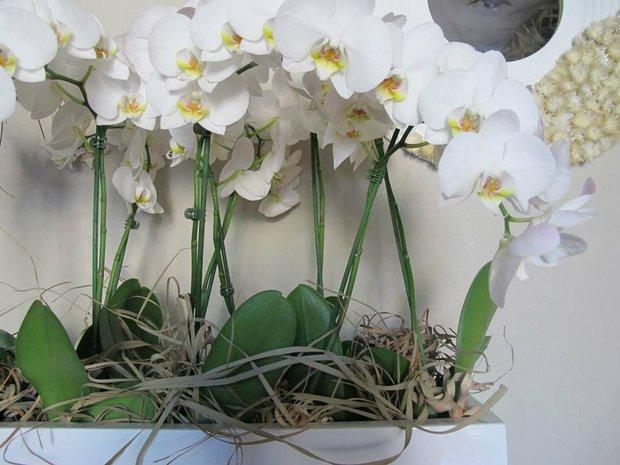 Připravte své květiny, ať jsou krásné po celý rok. Foto: