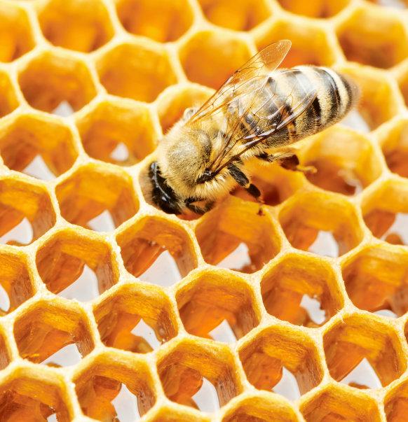 Med chutná, pomáhá a uzdravuje 4 Foto: