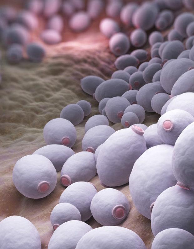 5 způsobů, jak se chránit před kvasinkovou infekcí kvasinky Foto: