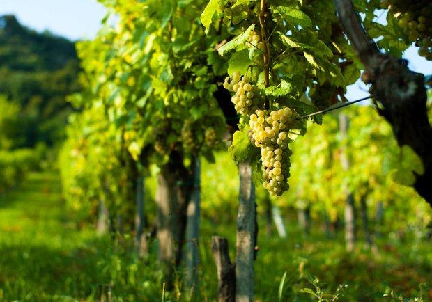 Co znamená, když je víno Bio 4 Foto: