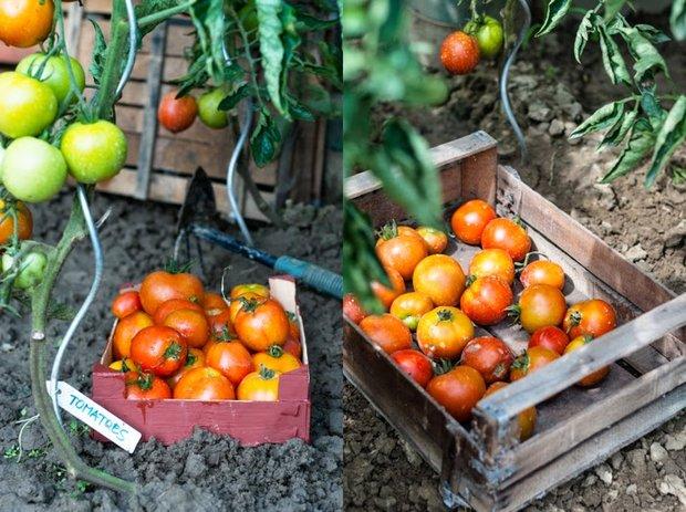 Rajčatový koláč Foto: Sweet pixel blog