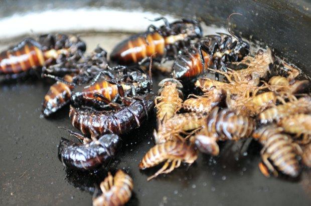 Petr Oknecht - šéfkuchař jedlého hmyzu 3 Foto: