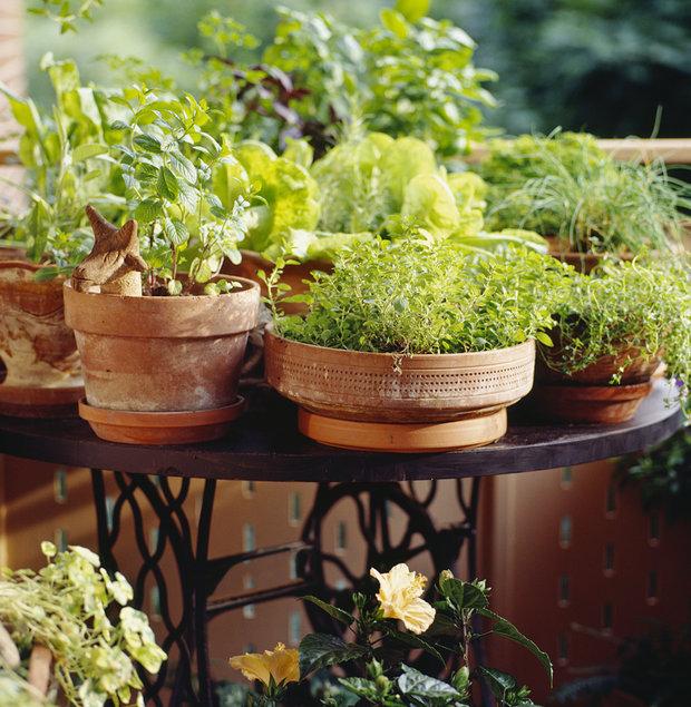 Bylinky na balkóně nejsou pouze praktickou záležitostí, koutek se zelení ve městě určitě potěší každého Foto: