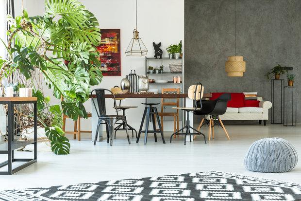 I do moderního interiéru patří pokojové rostliny. Víte ale, co vlastně v zimě potřebují? Foto: