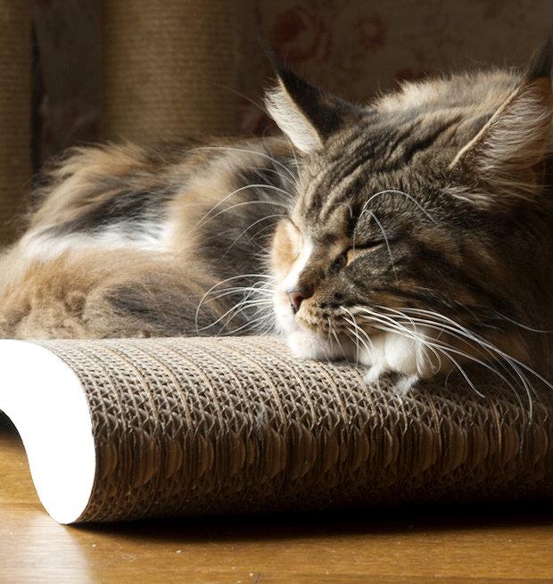 Škrabadlo pro kočky Foto: