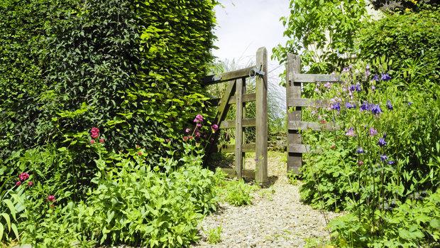 Živé ploty se hodí zejména na venkov Foto: