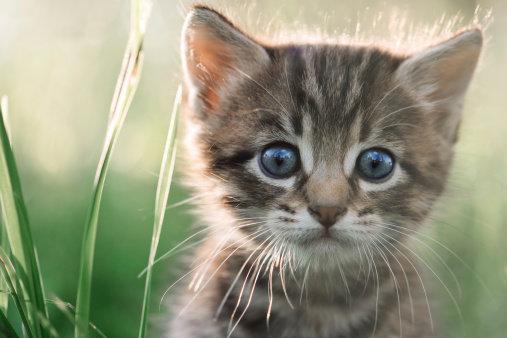 Domácí mazíčci - kočičí škrábnutí Foto:
