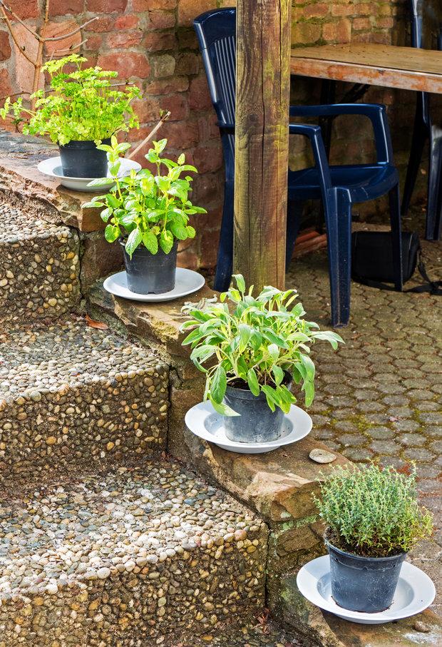Stále ještě nevíte, kde budete letos bylinky pěstovat? A co třeba schodiště u vchodových dveří? Foto: