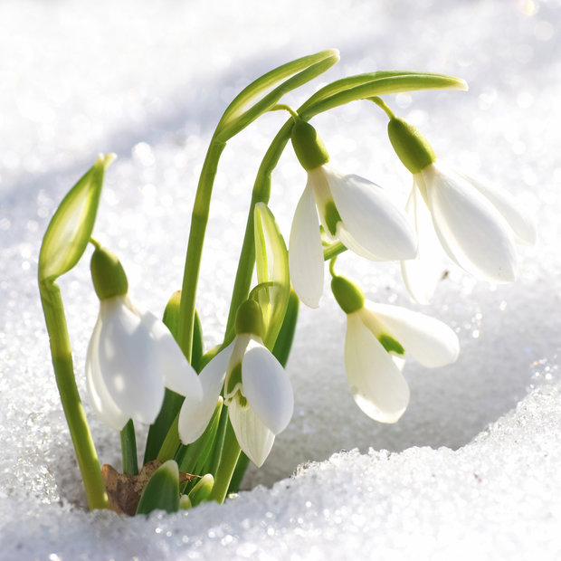 Příchod jara Foto: