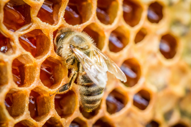 Co možná nevíte o medu 2 Foto: