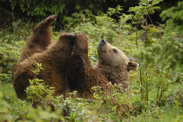 jak spíte - medvěd Foto: