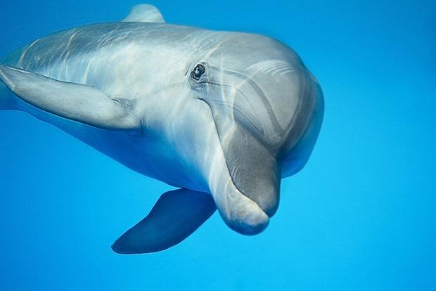 jak spíte - delfín Foto: