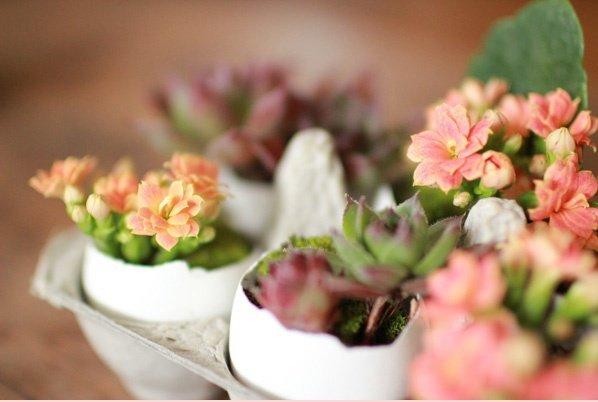 květiny ve skořápkách Foto: