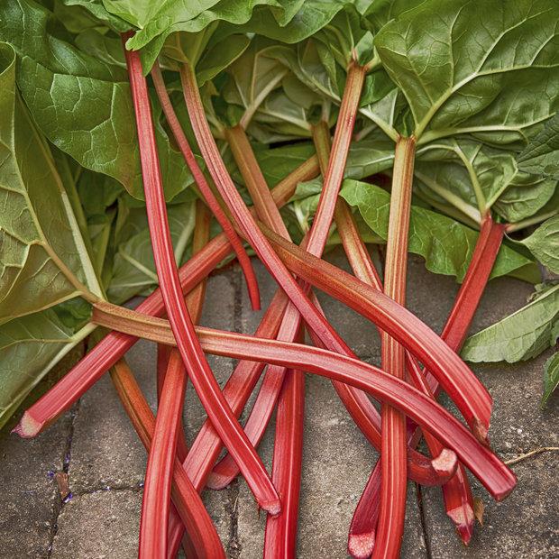 Rebarbora je úžasná rostlina, která dodá moučníkům kyselkavou příchuť Foto: