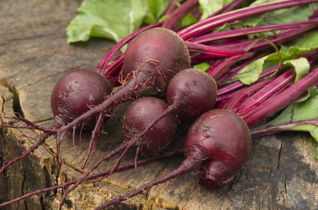 Červená řepa/Beta vulgaris var. crassa - detail Foto: