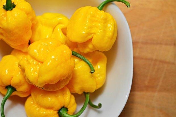 7 pot brain strain yellow chinense Foto: Petr Klemeš