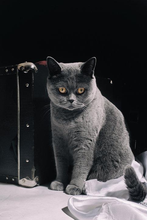 Velké ženy chlupatá kočička