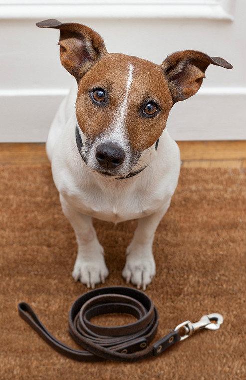 10 jednoduchých způsobů, jak spálit 100 kalorií pes Foto: