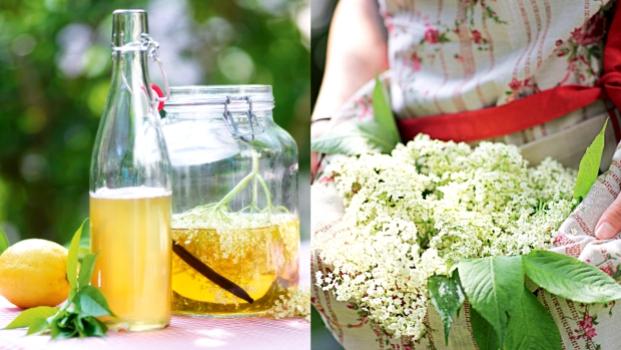 Sirup a ocet z bezinkových květů