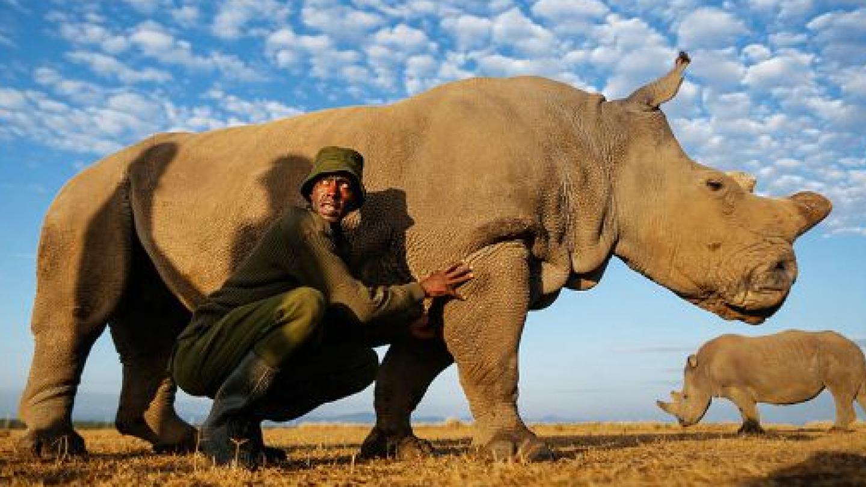 V keňské rezervaci Ol Pejeta se o něj starají královsky. Na světě je už jen pár samic severního bílého nosorožce a jen tento jediný samec. Člověku se chce až brečet z toho, co jsme provedli.