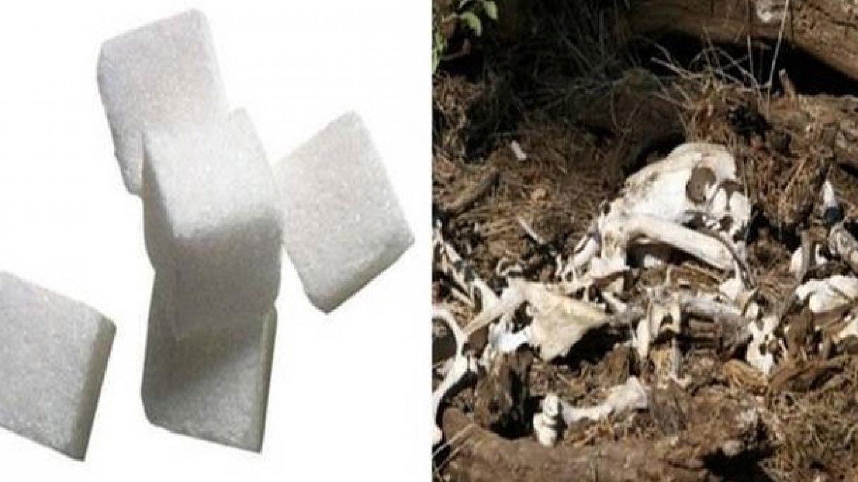 Víte, jak vzniká cukr? Aby se řádně profiltroval, používá se fosforečnan vápenatý. Víte, jak vzniká fosforečnan vápenatý? Tím, že spálíte nějaká zvířata a vezmete z jejich spálených kostí ten prach