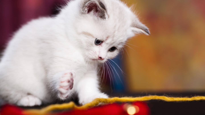 Extrémně roztomilé fotografie vyvolávají agresivitu - Obrázek 7