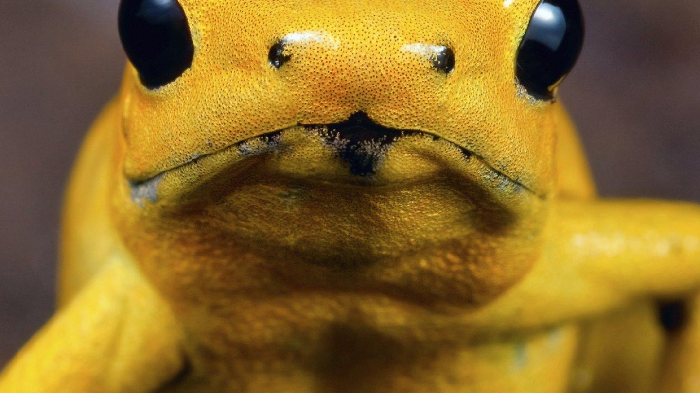 Žáby všech druhů