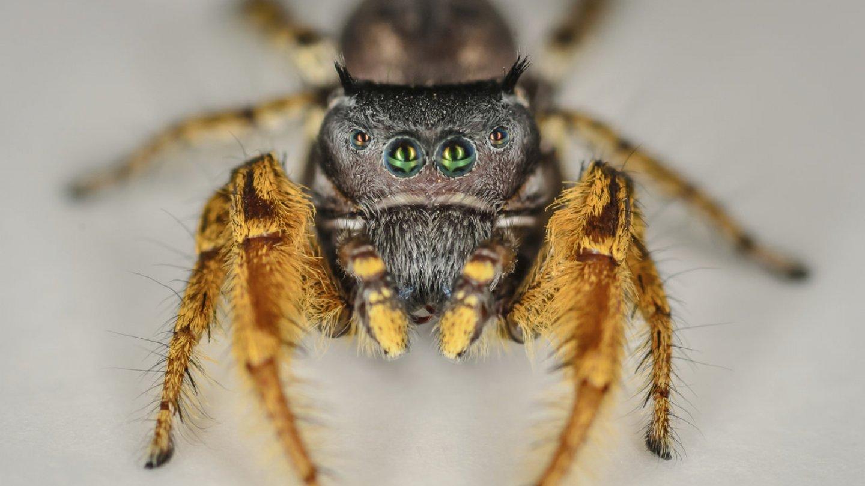 Nejkrásnější pavouci světa - Obrázek 4