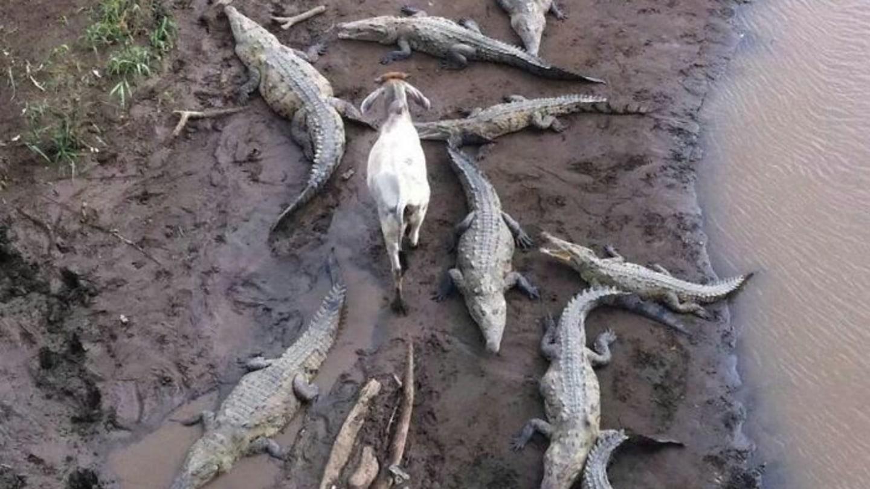 Tahle koza se s tím moc nemaže
