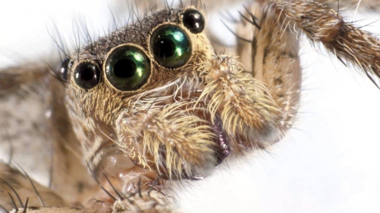 Nejkrásnější pavouci světa - Obrázek 9