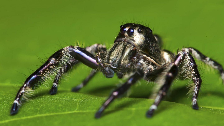 Nejkrásnější pavouci světa - Obrázek 17