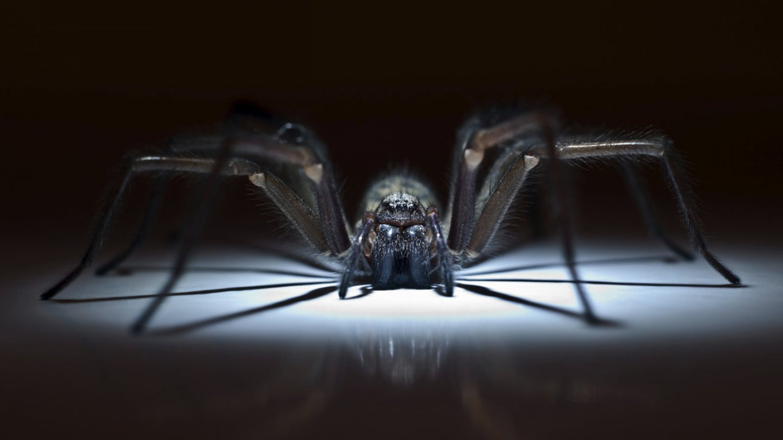 Nejkrásnější pavouci světa - Obrázek 18