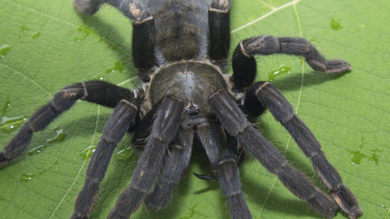 Nejkrásnější pavouci světa - Obrázek 20