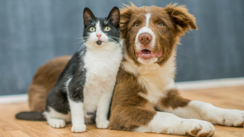 Opravdu se psi a kočky nesnášejí? Genetická nenávist mezi nimi rozhodně nevládne – Tajemné kočky | Prima Zoom
