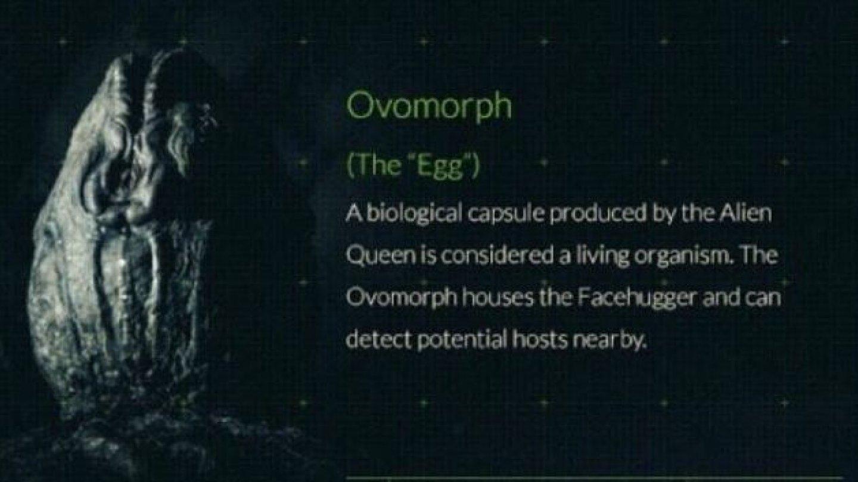1) Ovomorph