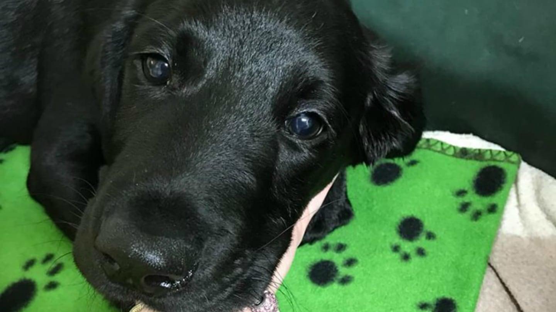 Týraný pes je v péči profesionálů