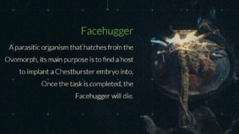 2) Facehugger